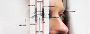 Exercise 03 : The Eyes