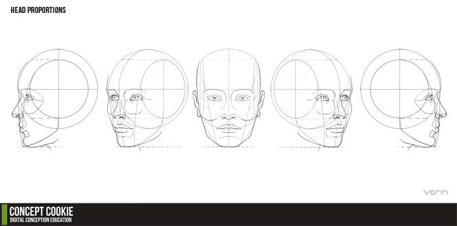 Head Proportions Reference Resource by ConceptCookie
