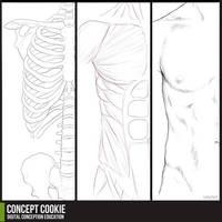 Anatomy Resource: Male Upper Body by CGCookie
