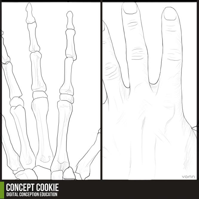 Anatomy Resource: Hands by ConceptCookie
