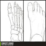 Anatomy Resource: Feet