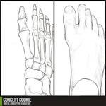 Anatomy Resource: Feet