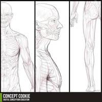 Anatomy Resource: Full Male Body by CGCookie
