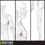 Anatomy Resource: Full Male Body