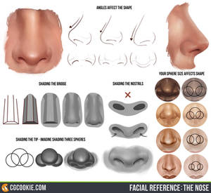 Facial Reference: The Nose