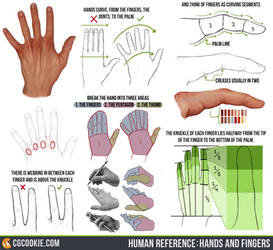 Human Reference: Hands and Fingers