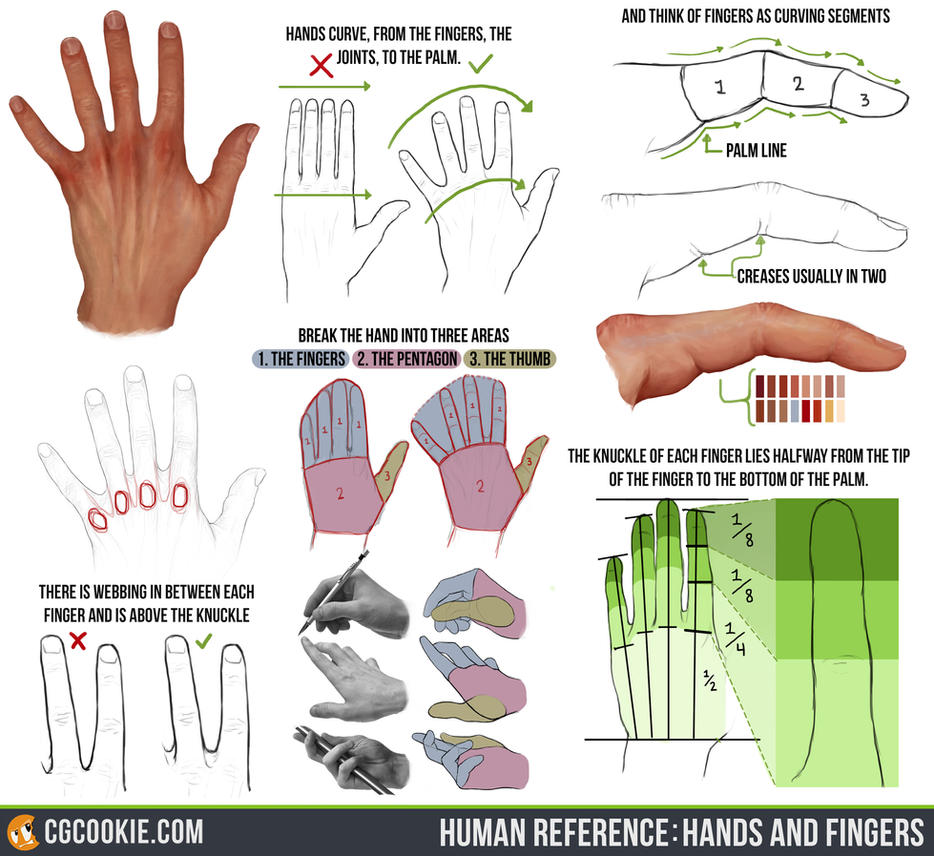 Human Reference: Hands and Fingers by CGCookie