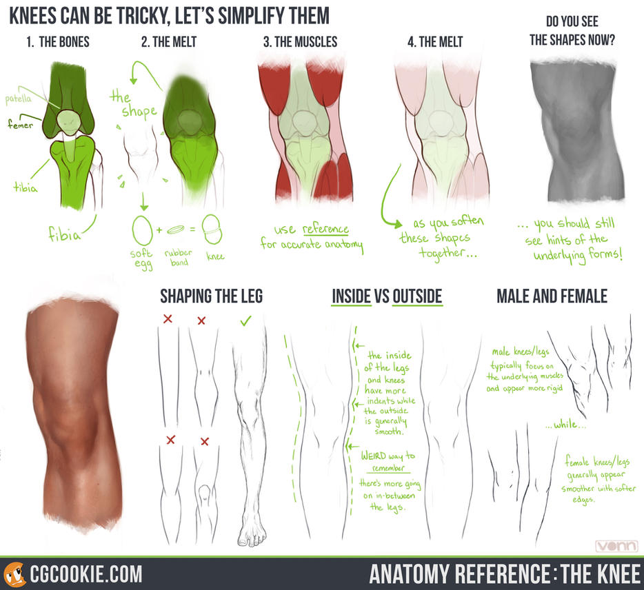 Anatomy Reference: The Knee by CGCookie on DeviantArt
