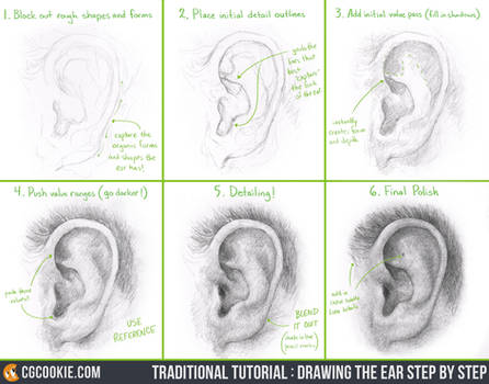 Tutorial: Drawing the Ear Step by Step