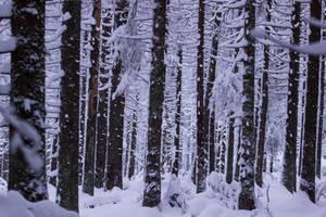 Snow Everywhere by Goldzwerg