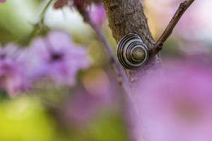 Spring Snail by Goldzwerg