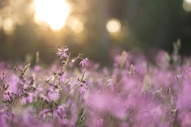 Summer Sun by Goldzwerg