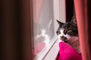Cat at the window by Goldzwerg