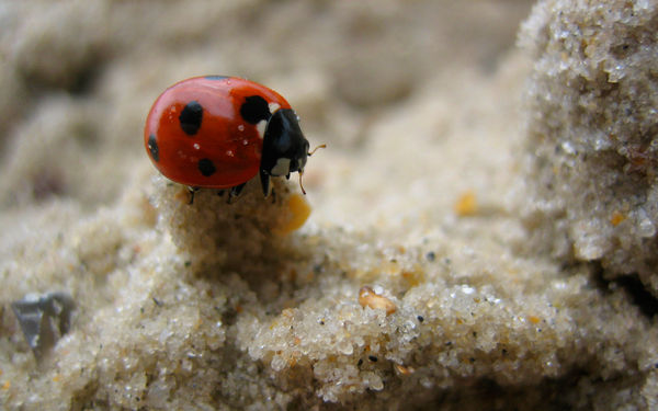 Lady Bug on the Tower of Sand