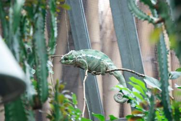 Chameleon by Appl3ju1ce