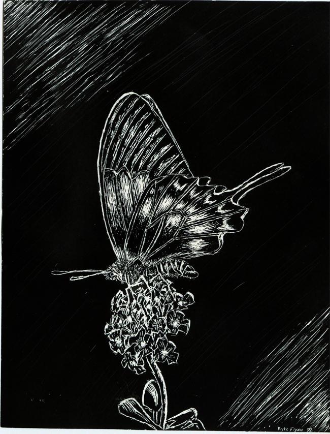 Butterfly scratchboard - photo#6