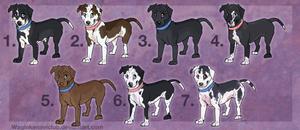 Mella x Xavier Pups-CLOSED by WagginKennelClub