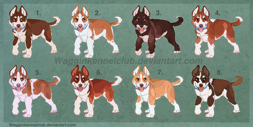 Red Husky Litter CLOSED by WagginKennelClub
