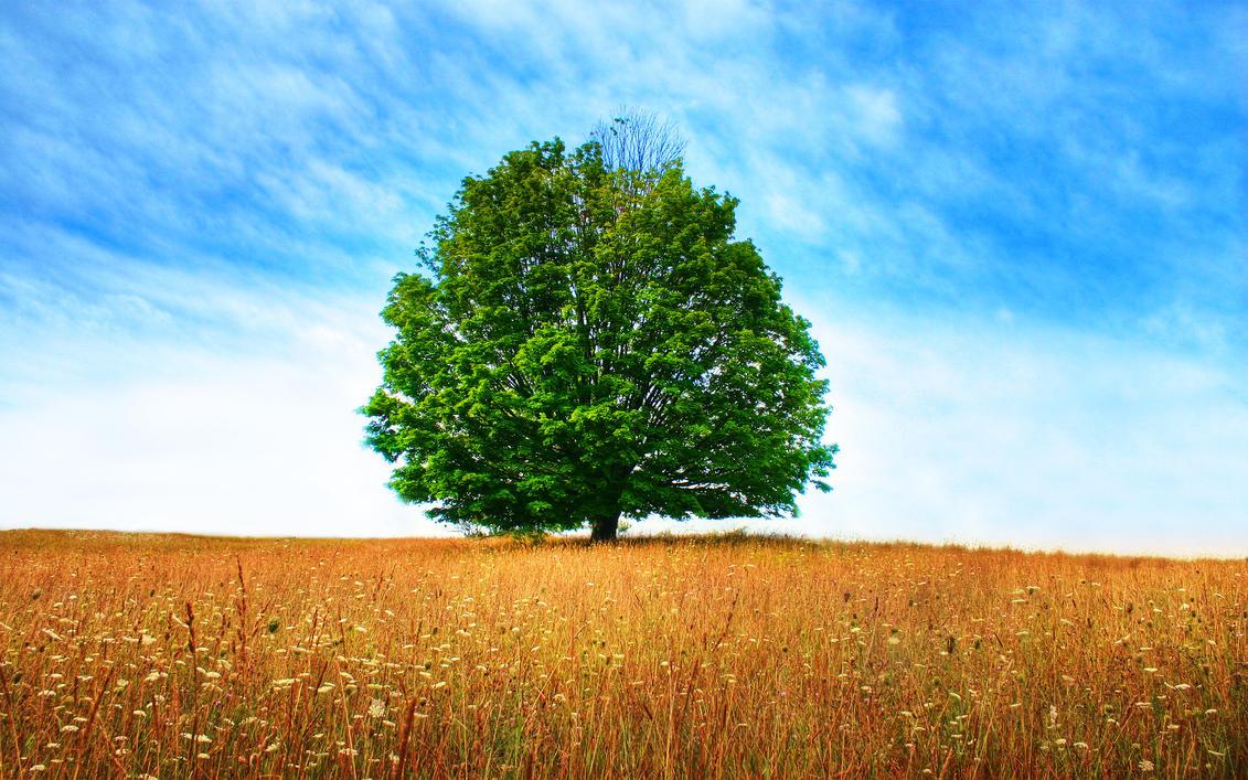 Paul's Tree by tch