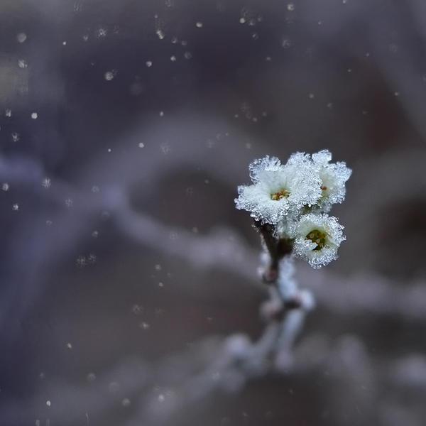frozen breath II by JoannaRzeznikowska