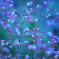 flowery feelings III by JoannaRzeznikowska