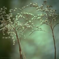 my magic IV by JoannaRzeznikowska