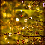 golden dreams II