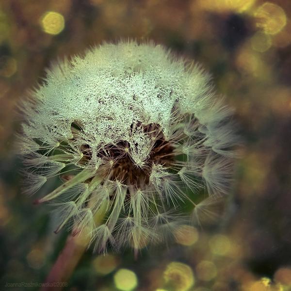 heavy tears by JoannaRzeznikowska