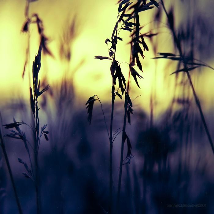 withering dawn by JoannaRzeznikowska