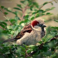 morning sparrow by JoannaRzeznikowska