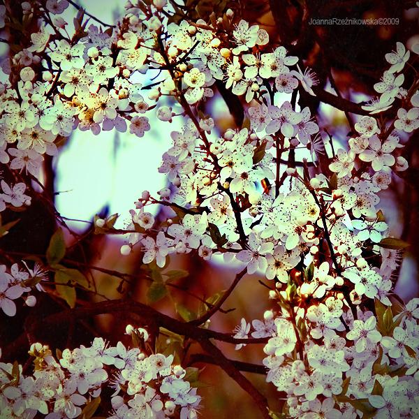 spring spring II by JoannaRzeznikowska