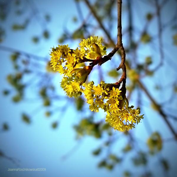 spring spring III by JoannaRzeznikowska