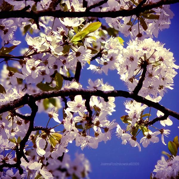spring spring IV by JoannaRzeznikowska