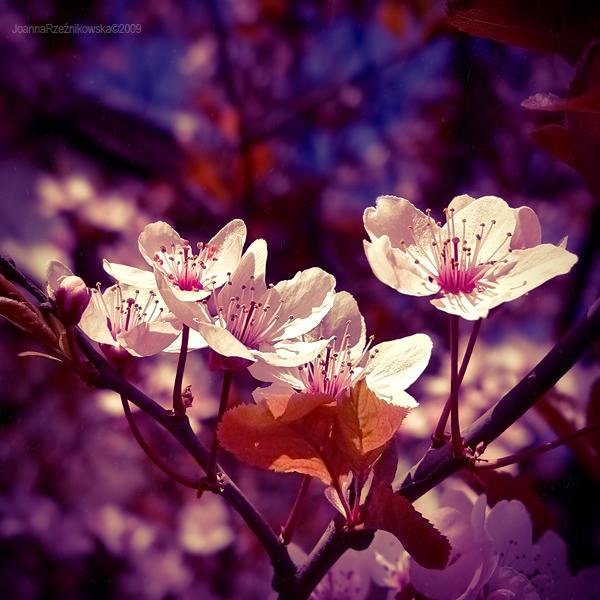 spring spring V by JoannaRzeznikowska