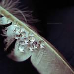Weeping Angel by JoannaRzeznikowska