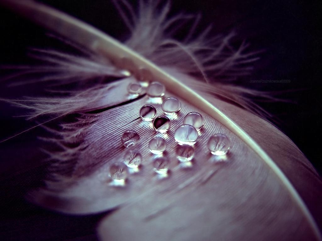 Apprendre à se raser à 50 ans, journal Weeping_angel_ii_by_babyjoan