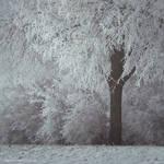 Winter Mood II by JoannaRzeznikowska