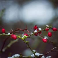 ...cold days II... by JoannaRzeznikowska