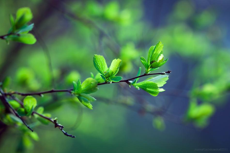 taste my spring III by JoannaRzeznikowska