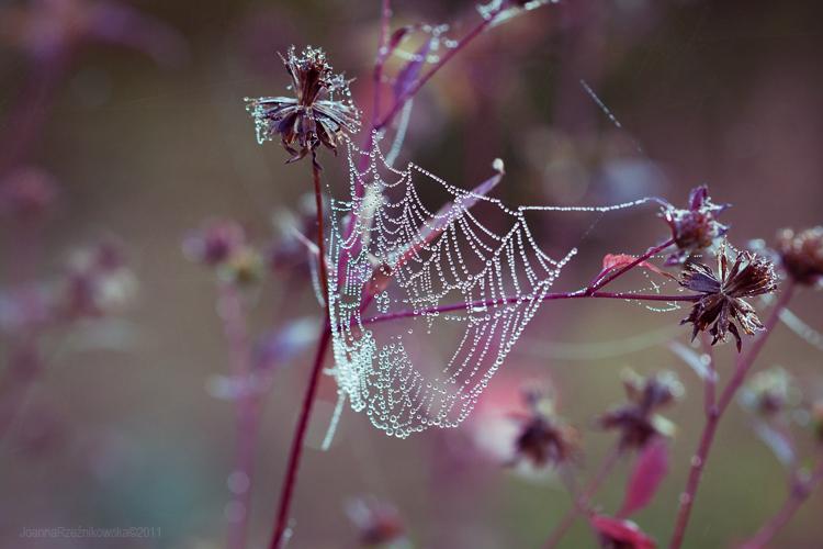 ...Young Autumn XII... by JoannaRzeznikowska