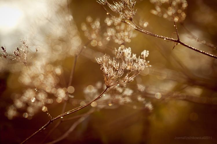 Golden Autumn II by JoannaRzeznikowska