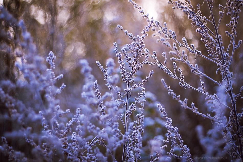 ..:: First Frost XVI ::.. by JoannaRzeznikowska