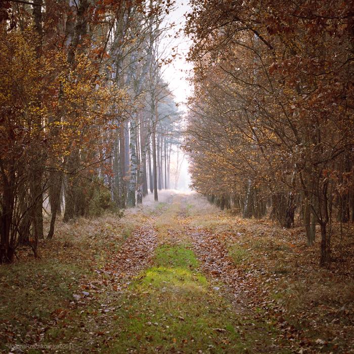Autumn In The Forest by JoannaRzeznikowska