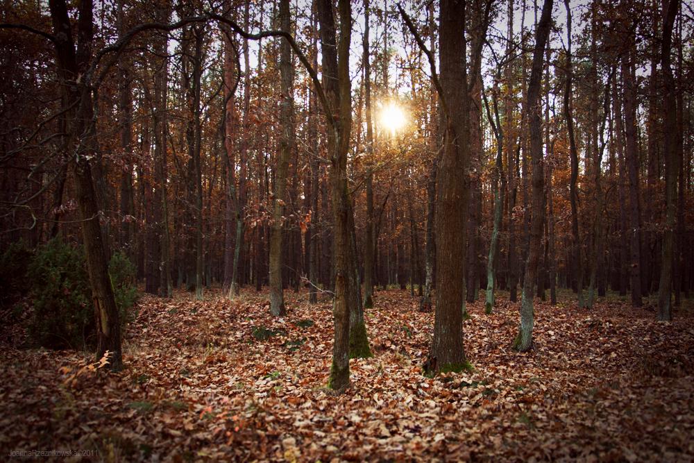 Autumn In The Forest VIII by JoannaRzeznikowska