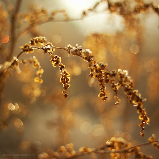 golden love by JoannaRzeznikowska