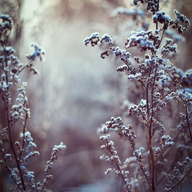 ..:: First Frost XXIII ::.. by JoannaRzeznikowska