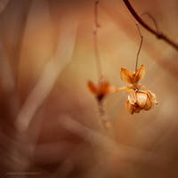 _Spirits of November IV_ by JoannaRzeznikowska