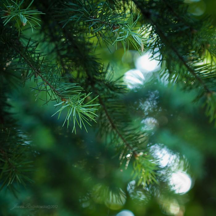 green...again IX by JoannaRzeznikowska