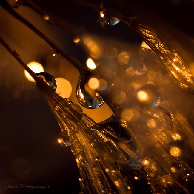 ...delicate tears XVIII... by JoannaRzeznikowska