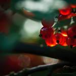 beauty of nature XXXII by JoannaRzeznikowska